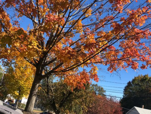 Foliage returns to Concord High School, too