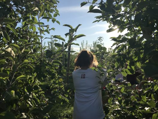 Apple season is going strong at Carter Hill Orchard