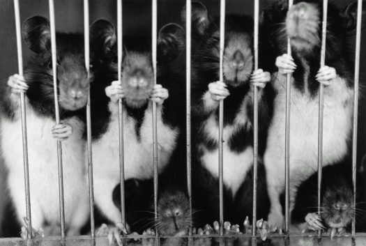 Animals are subject to unthinkable sufferings due to animal testing.