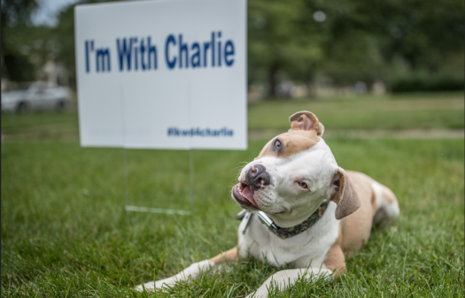 Charlie the pit bull mix who started it all takes a picture with his sign.