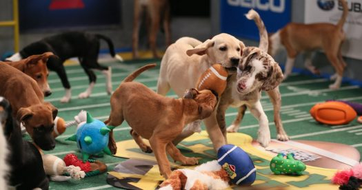 The puppies from both teams, in the mist of a 'ruff' competition.