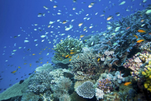 Australia hopes to save the Great Barrier Reef with their multi-million investment