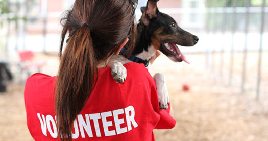 Volunteer at animal shelters to help pets get adopted