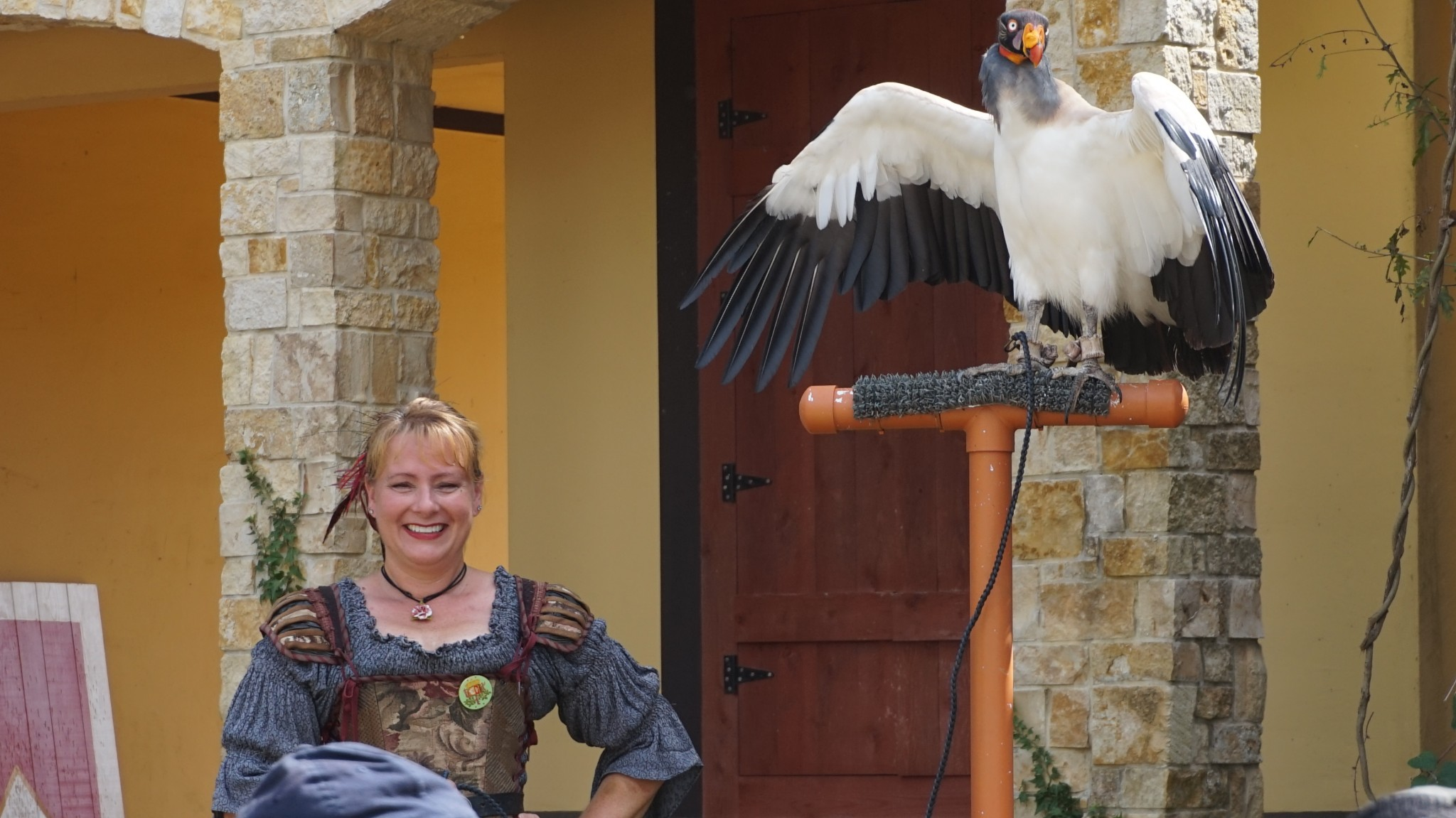 This Birds of Prey outdoor performance has many birds for visitors to behold