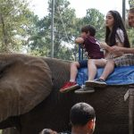 This Elephant ride is enjoyable for the whole family