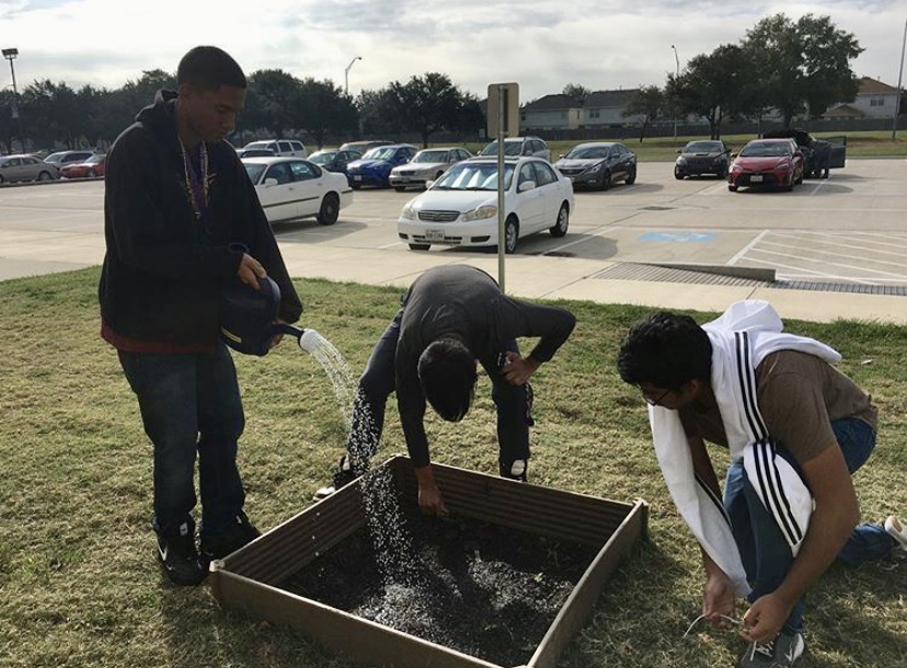 Juniors Montrell Hardy, Elvis Tran, and Vipash Nanda water the plants they have planted