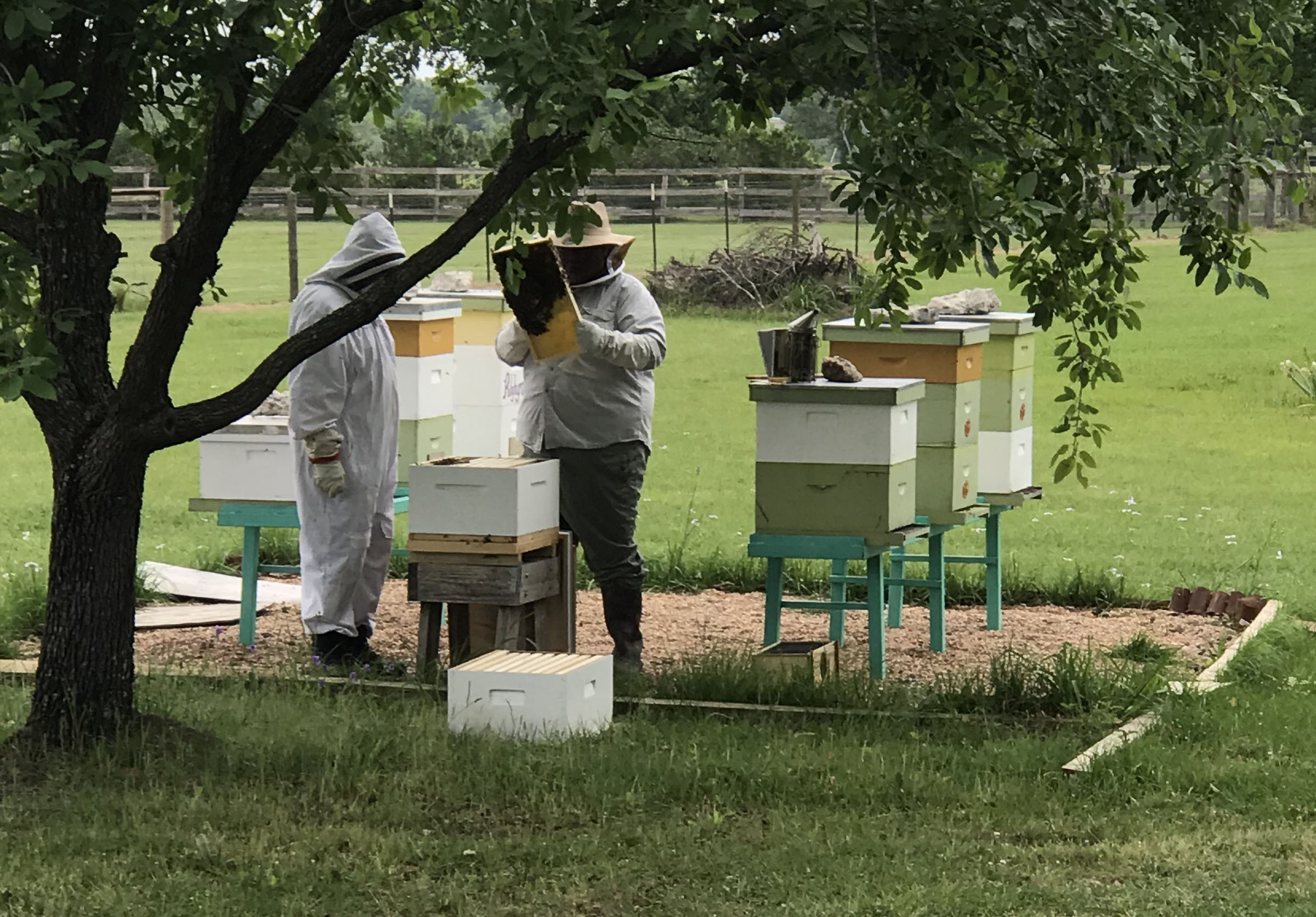 The family of beekeepers checks up on the bees.