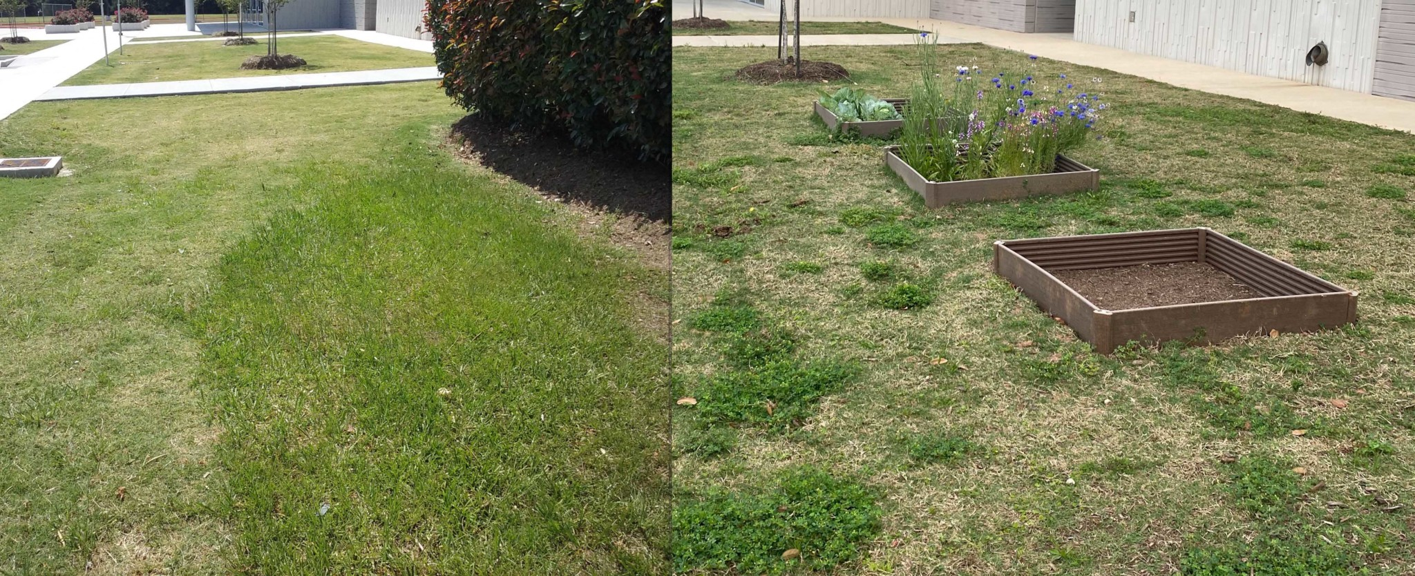 Before and after the planting.