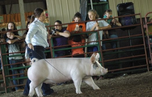 Shelby Boden showing at the Jackson County Fair