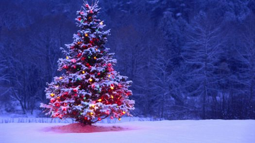 Interesting Facts About Christmas.Ten Interesting Facts About Christmas The Voice