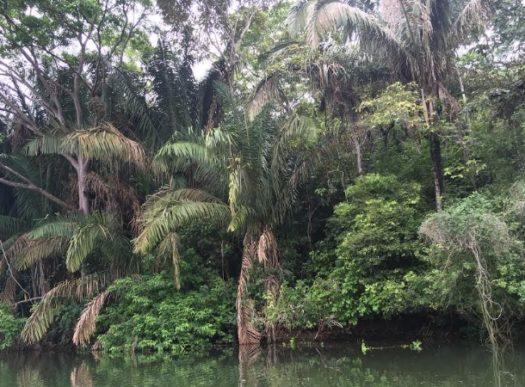 Rain forest in Panama