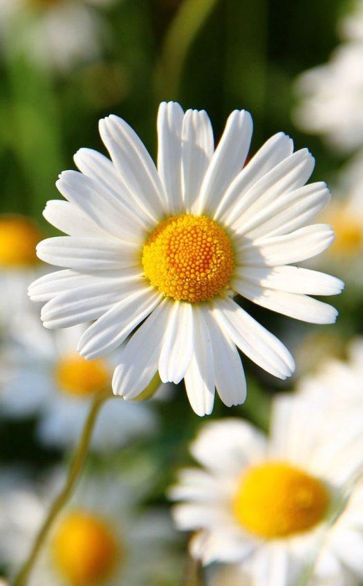 Friendships Bloom Like Flowers